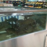 Strange to see carp in Tescos.