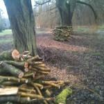log pile after log pile...