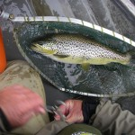 big trout mayfly 138 (Large)