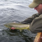 big trout mayfly 203 (Large)