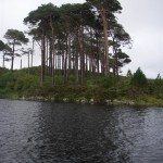 Pine Island, One of the most photographed scenes in Connemara.