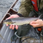 A beautiful seatrout around 1lb..