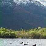 Black swans..