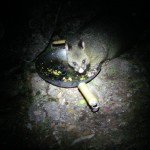 This possum didn't mind hugh's cooking!