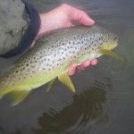 A nice little fish in my last few days in Tassie!