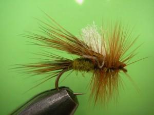 My cicada..