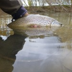 A couple of these before the weather took a turn for the worse and the sparse hatch ended..