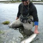 Perfect silver fish!