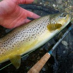 Plenty good trout about..
