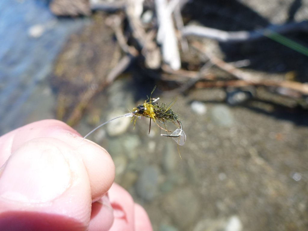 I saw a fish, made a cast and briefly foul hooked him! He ended up eating a fly with his own scale on it..