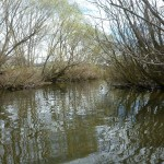 I had some excellent close range fishing in here..