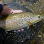 A nice brown for me shortly after..