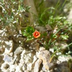 Okay, Breandan.. you have work to do!! What are these Otago flowers? This little one is about 6mm in diameter.