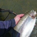A recent weekend fishing around Omarama yielded some cracking rainbows..