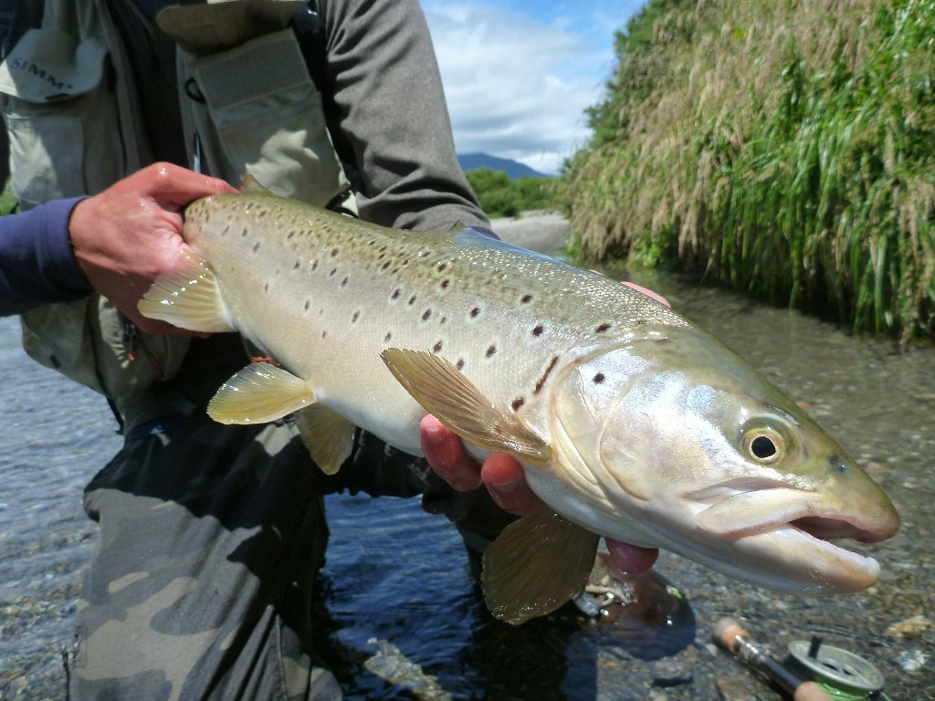 Some really perfect, fit, fat fish about.. This one has an unusual elongated spot..