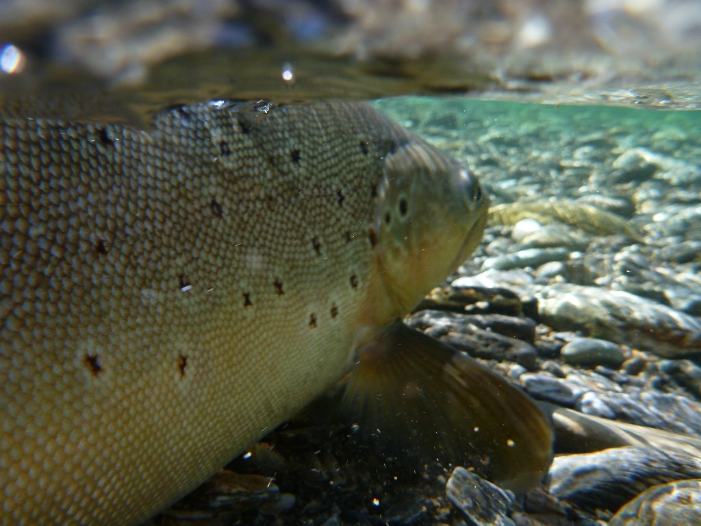 The river was alive with nymphs and trout!