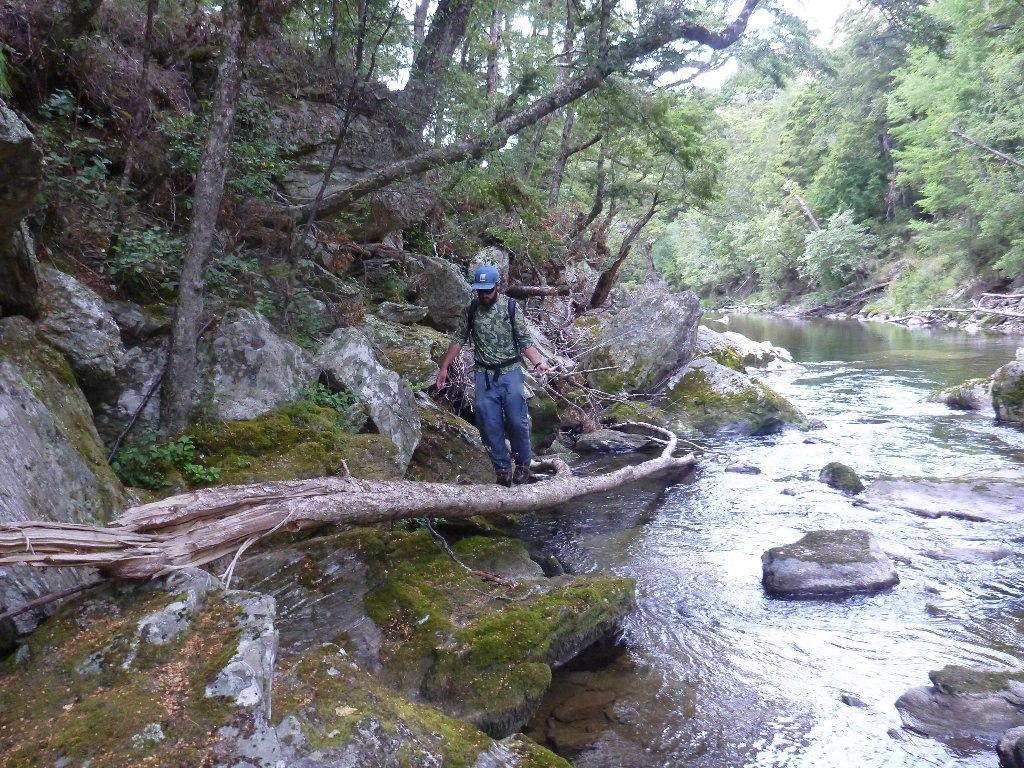 Fallen trees make great pathways!