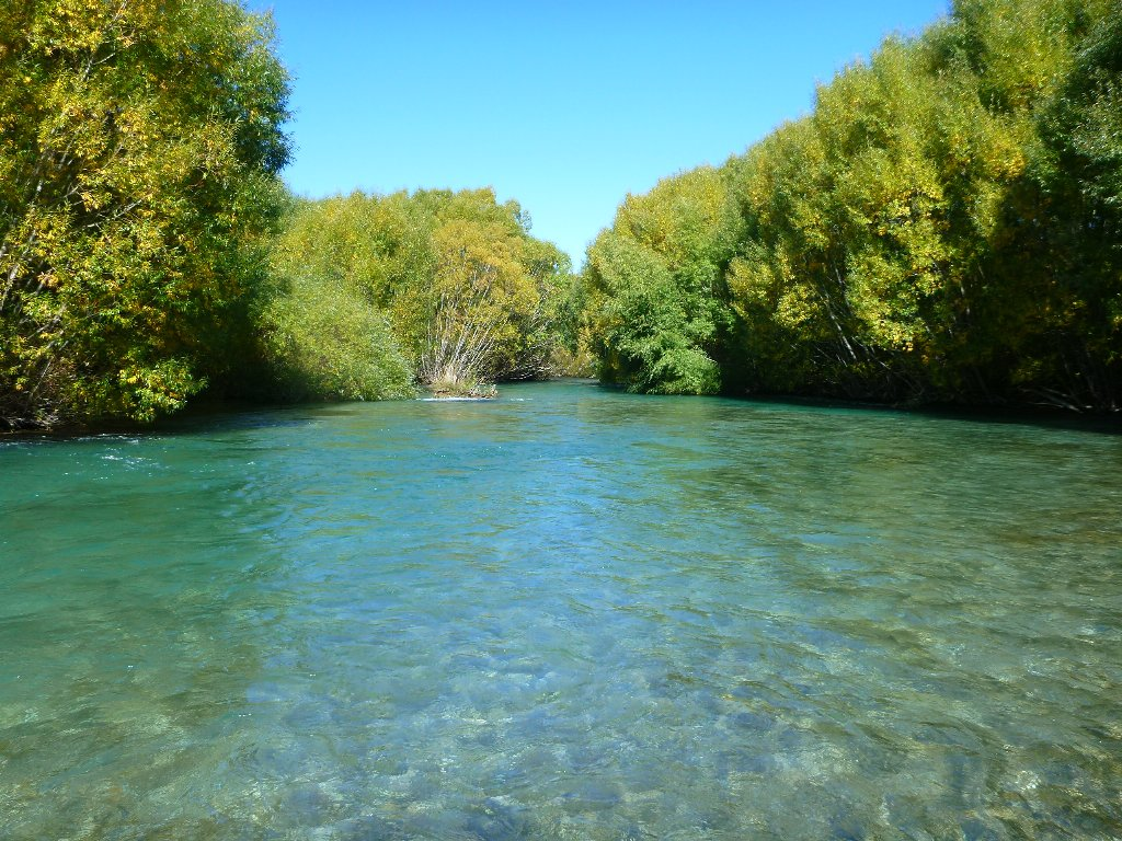 Willows provide great cover and habitat for trout and stabitity for rivers.
