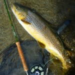 Cloud and rain forecast but I got a good bit of sun! And some great trout... This one blind from a riffle.