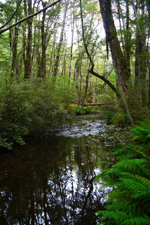 The little stream leaving Lake Sylvan.