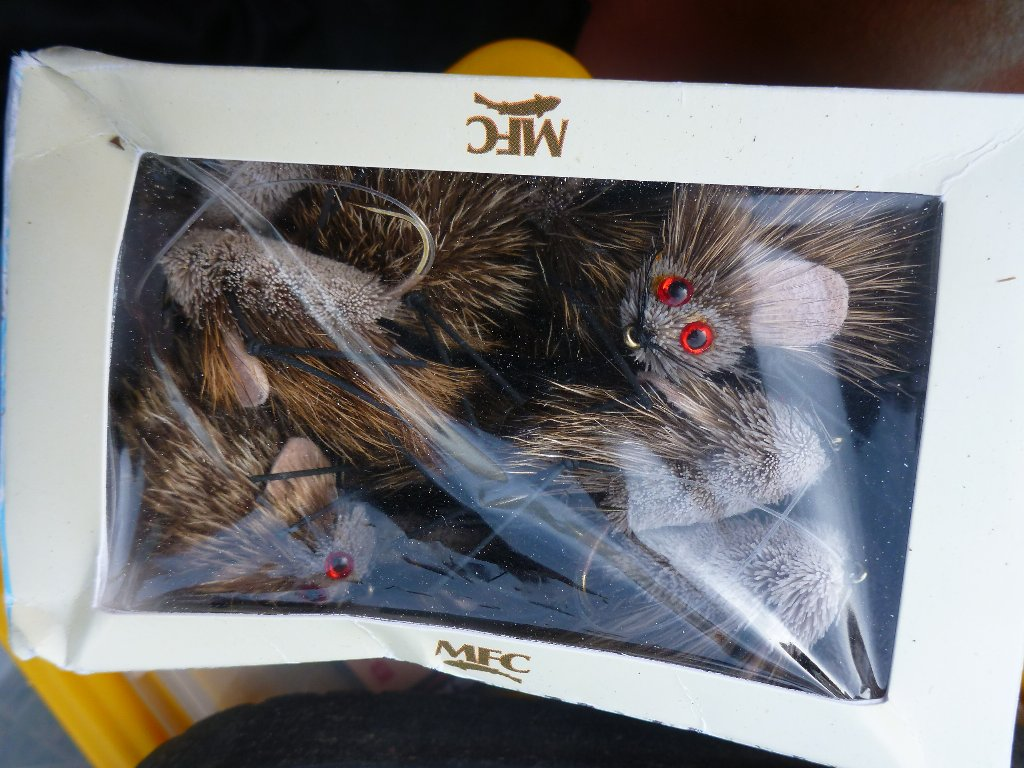 Let the big fish mission commence! A box of mice and were off..