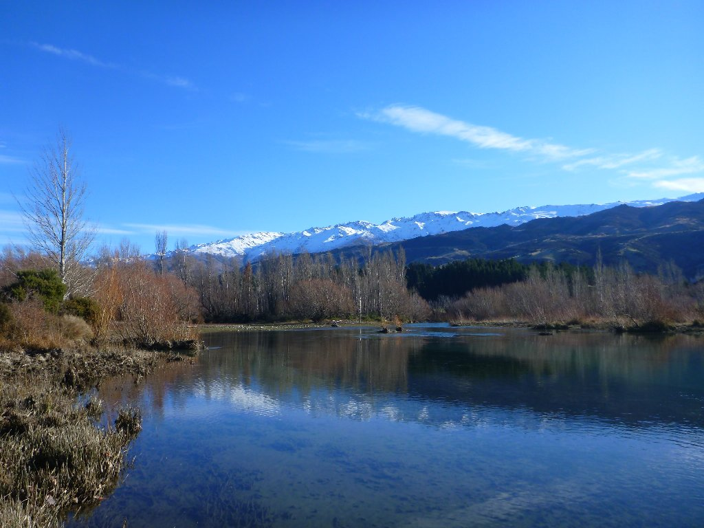 The Clutha can be a tough place to catch a trout but a stunning place to be!