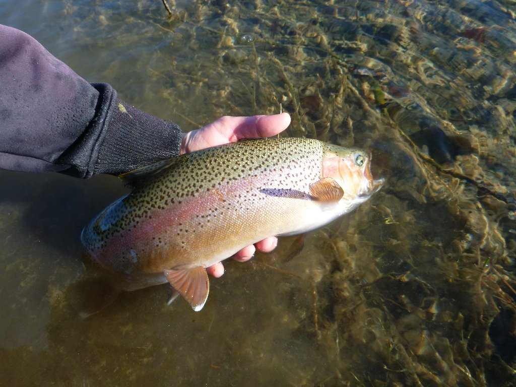 A good trout from a side braid. I also had a couple of 4lbers. A brown and a rainbow that evaded my camera!