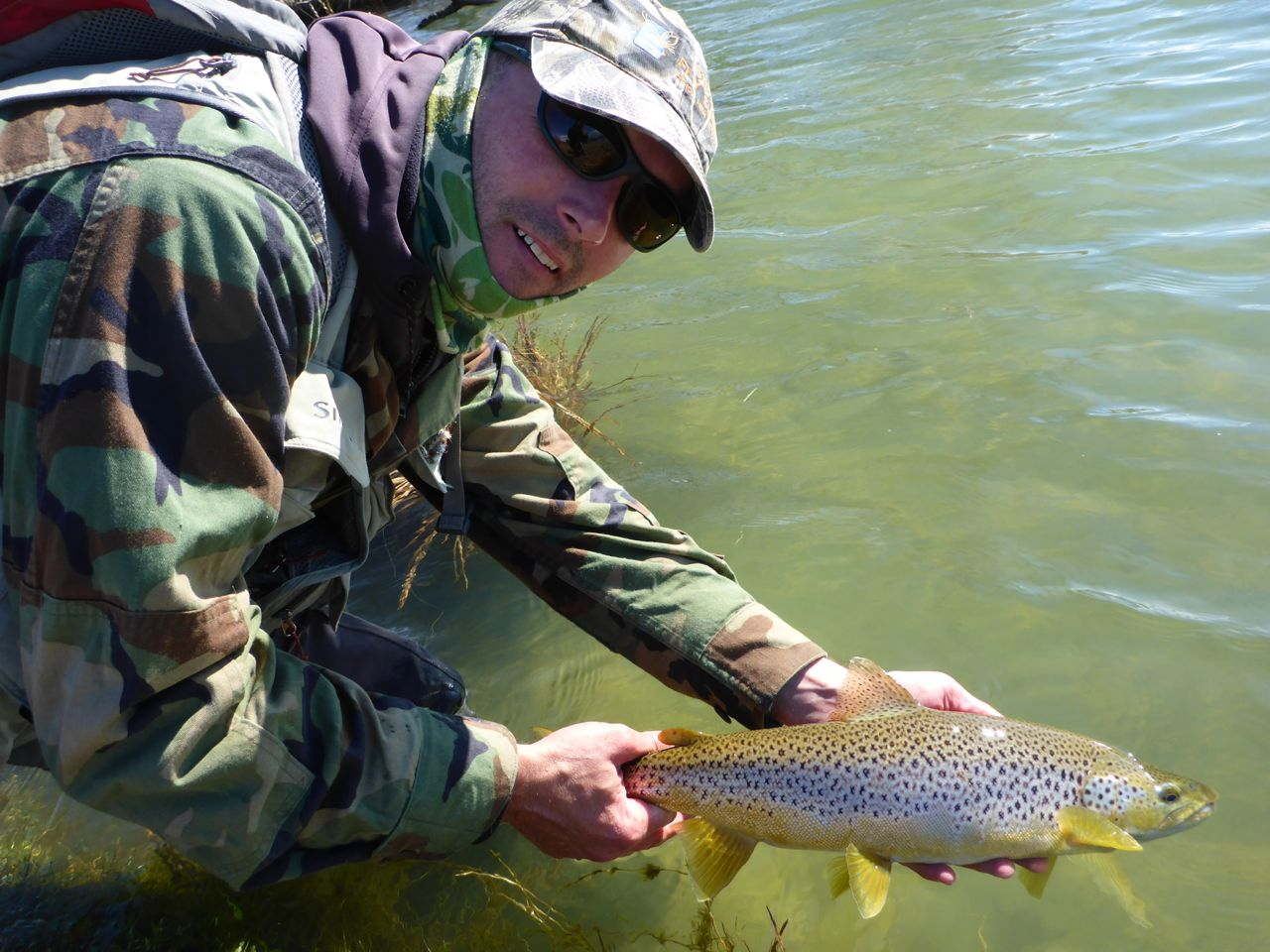 A great conditioned September brown from Benmore..