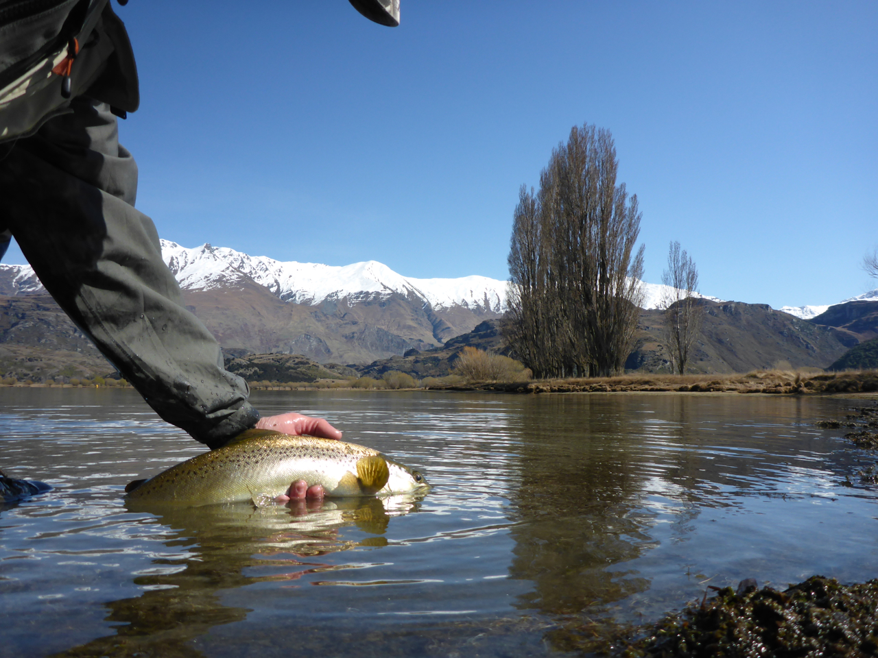 Buzzer fishing in the flat calm accounted for 4 good trout...
