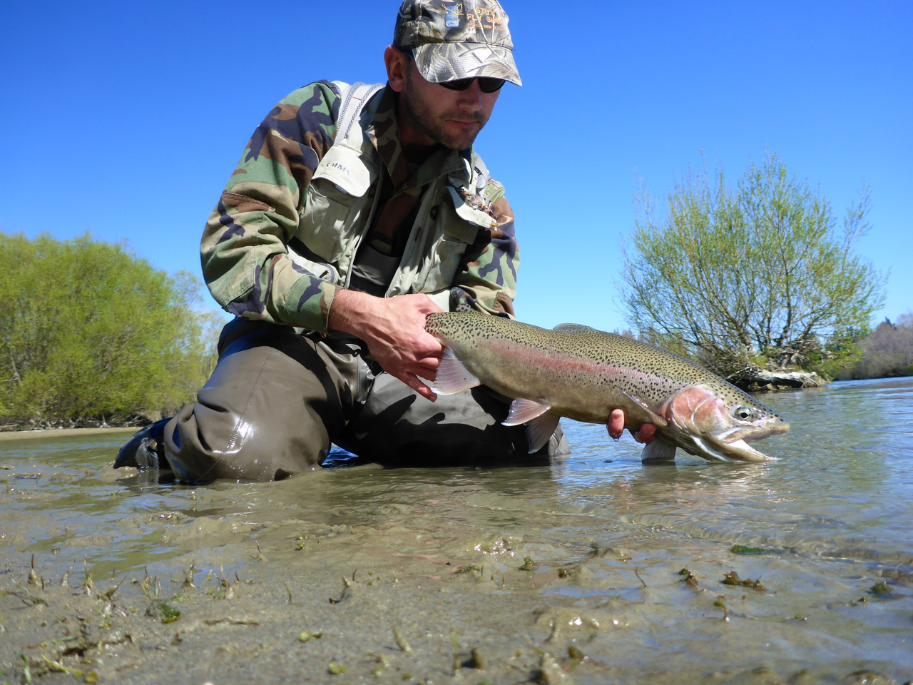 A good rainbow from the main river.. I had great sight fishing  on the edges for browns and rainbows the weekend before the season opened. (Clutha is open all year!)