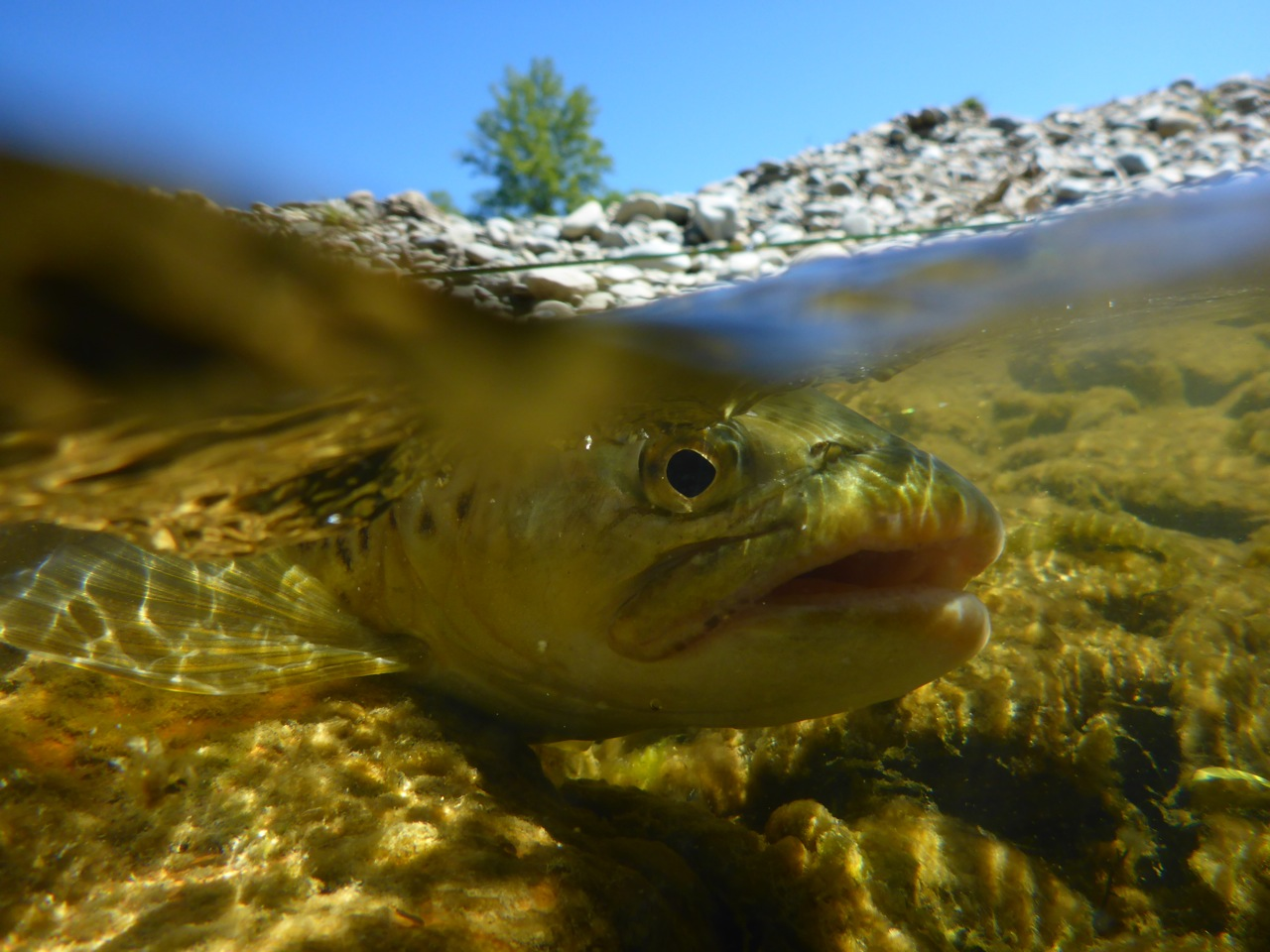 NZ is not all about big trout, far from it. Some of the best fishing you can have is for trout in the 2 to 4lb range.