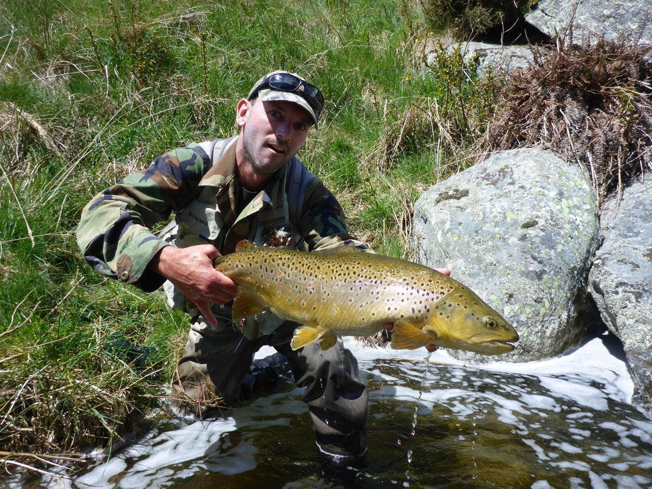 One for me.. A tank of a hen fish.