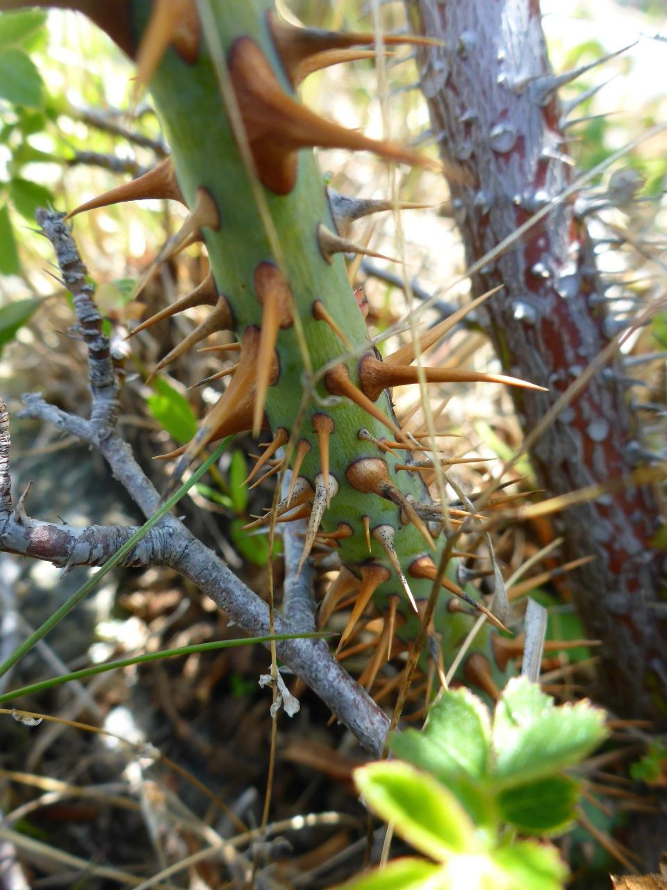 Thorns..