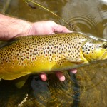This lovely brown from a high country tarn to save the day..