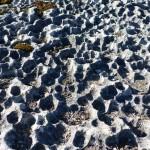 Lough Corrib limestone
