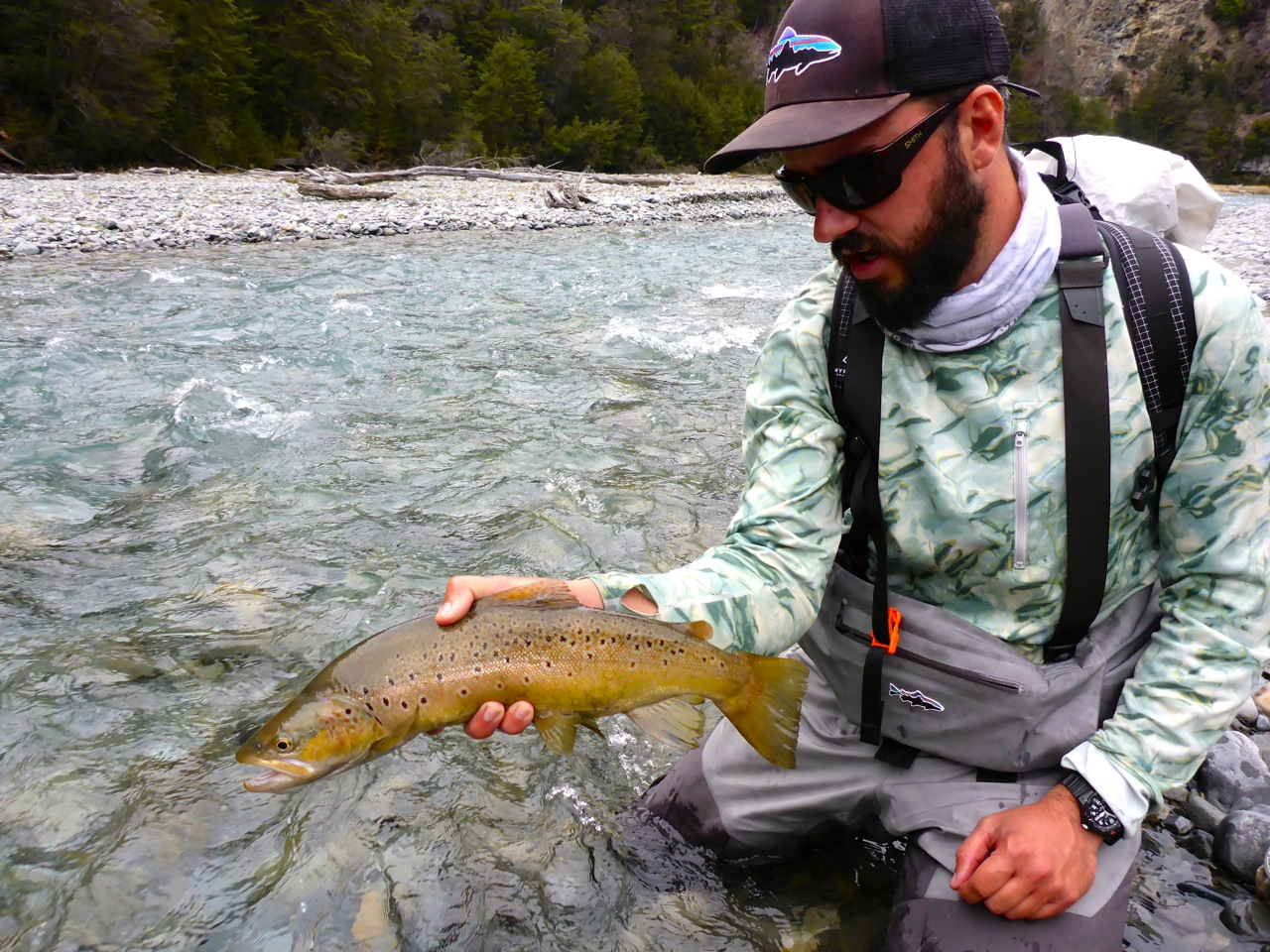 We found plenty browns migrating up river.. mostly like this one.