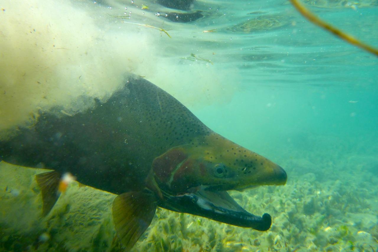 Like a morey eel!