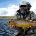 Perfect brown trout..