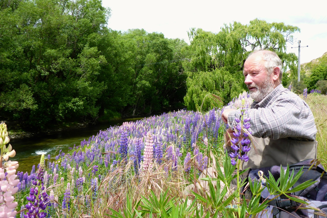 Dad in the lupins!