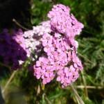 Breandan?? You were a bit slack on the last blogs Flora & Fauna!