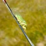 Cicada time!