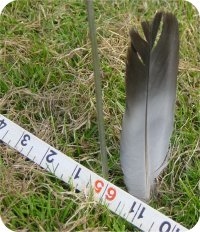 The feather sits untouched at 165 feet - Pete says 'bollocks'