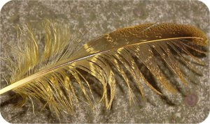 this is a feather; it's got barbs, fuzzy bits and an ability to groove'