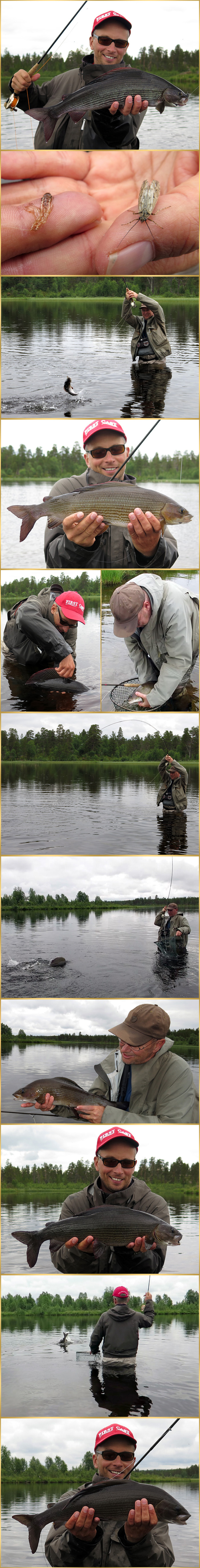 fly fishing grayling
