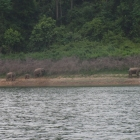 It's rare to see elephants on the lake edge but they are always around!