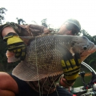 This is the real King of the Jungle!!! 4.4KG Gourami! Fish of the trip so far!!