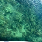 Clear water and corals