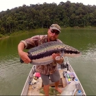 5KG Snakehead on Video