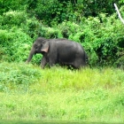 More elephants on the bank - many around at the moment