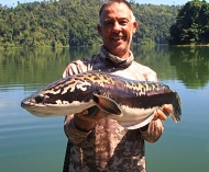 Tim's catch - 5kg Giant Snakehead